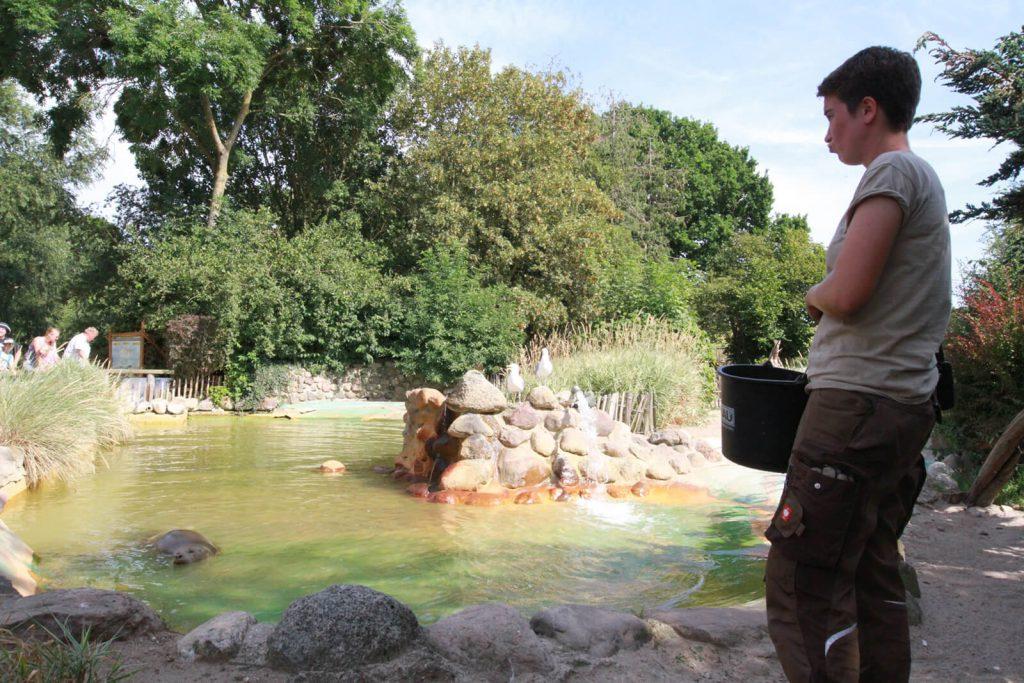 Fütterung der Seehunde im Zoo Arche Noah