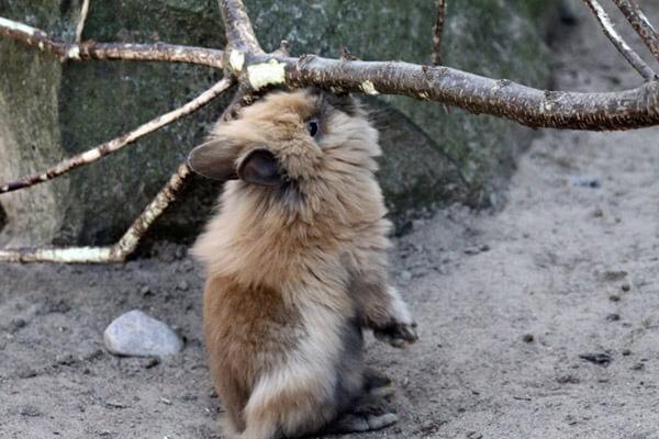 Kaninchen im Zoo Arche Noah