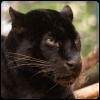 Patenschaft Panther