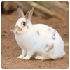 Patenschaft Kaninchen