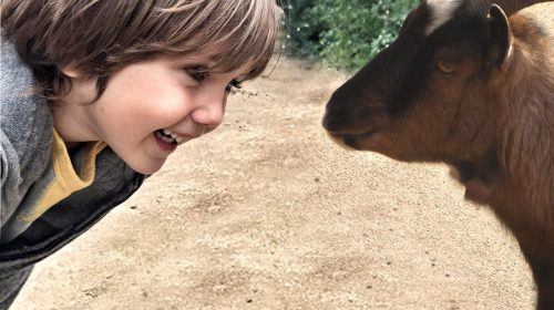 Junge lacht begeistert im Streichelzoo Arche Noah über eine neugierige Ziege